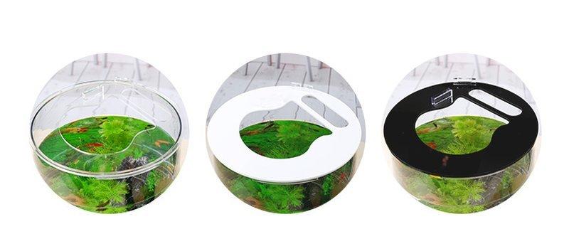 Lắp đạy Bể cá mini để bàn hình trụ tròn BC002 2