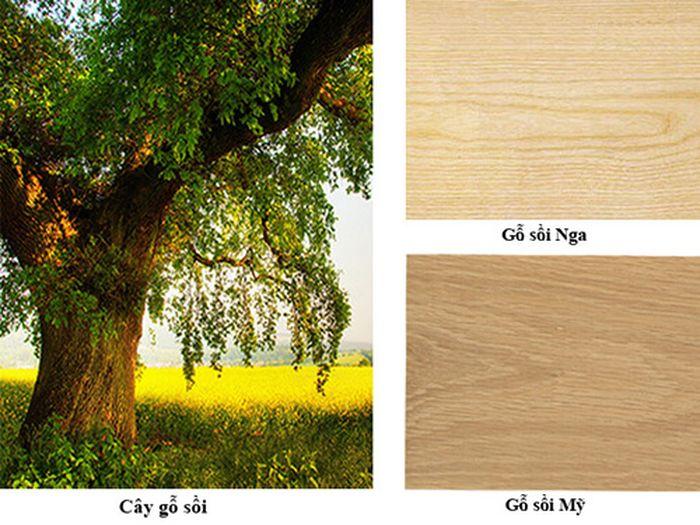 gỗ sồi là gì? cách phân biệt gỗ sồi